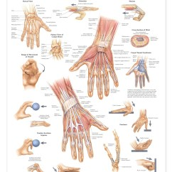 Labeled Ship Diagram Photo Eye Wiring Hand And Wrist Anatomical Chart - Anatomy Models Charts