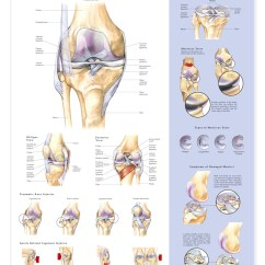 Knee Diagrams Anatomy Of A Number For Nickel Shell Diagram Injuries Anatomical Chart - Models And Charts