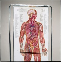 Thin Man Giant Anatomy Overlay Anatomical Chart - Anatomy ...