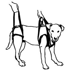 Walka boot, small, Harnesses & Restraints: shopmedvet.com