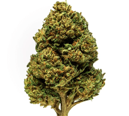Organically Grown Hemp Kush