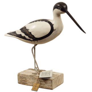 Avocet Walking