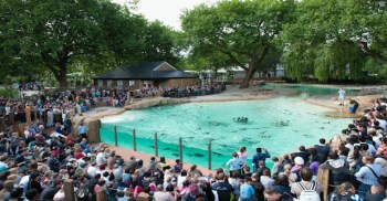 London Zoo clubcard redemption ticket voucher penguin beach