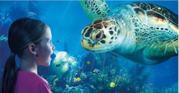 redeem clubcard vouchers at london sea life aquarium