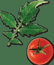 diet delivery bistroMD -tomato basil leaf