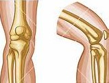 Joint Support Supplement MSM -Knee Joint