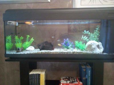 Miglior acquario 100 litri top 5 prezzi e confronto