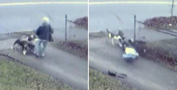 """Résultat de recherche d'images pour """"La voisine entend une femme terrifiée hurler et la découvre encerclée par une meute de chiens"""""""