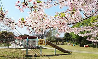萩の丘公園の桜