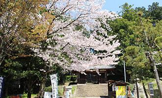 萩原寺の桜
