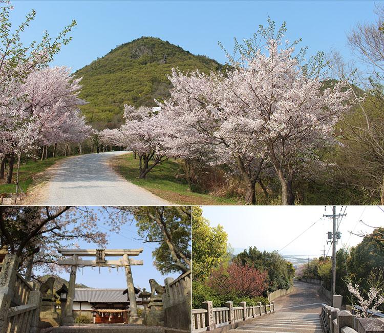 高屋神社の桜