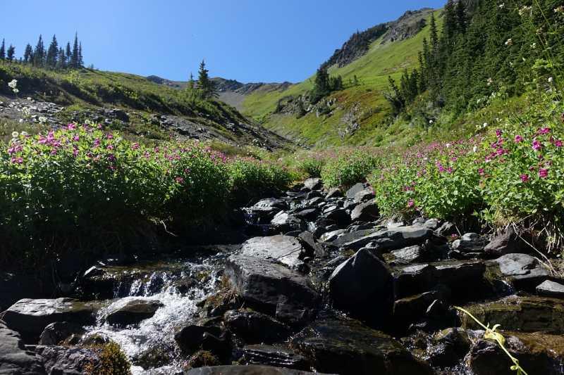 Dead Horse Creek and wildflowers below Skyline Divide
