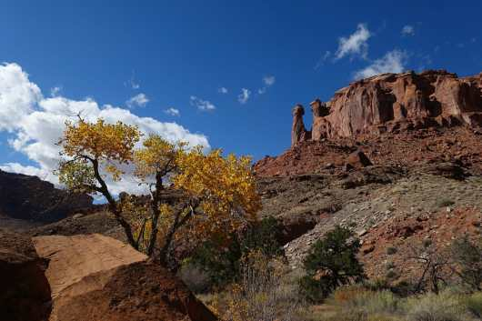 Fall foliage on the Syncline Loop trail, Canyonlands National Park