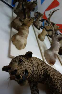 Taxidermied animals at the Musée de la Chasse et de la Nature
