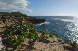 Plants and coast on the Maha'ulepu Heritage Trail, Kauai