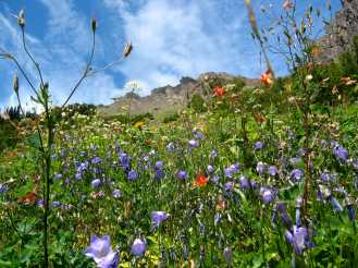 Wildflowers and mountains on the way to Marmot Pass