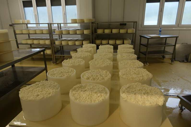 Future Cabrales cheese
