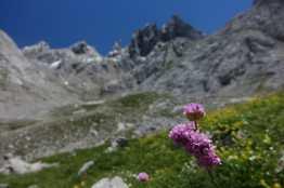 Flowers at Refugio Jou de Los Cabrones