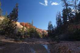 Near Tower Bridge, Fairyland Loop, Bryce Canyon National Park