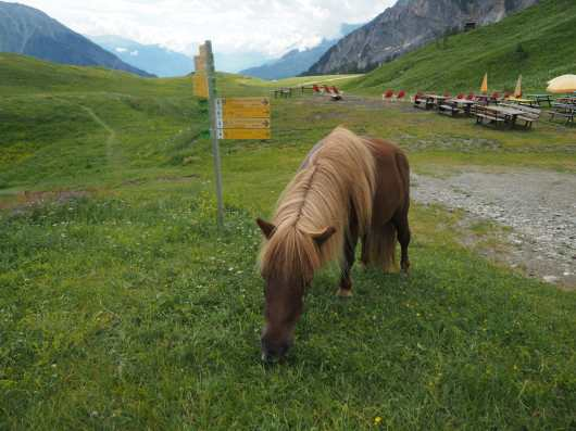 Pony grazing with TMB sign in the background