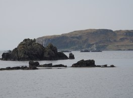 Seals in Lagavulin Bay
