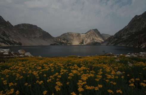 Flowers and Sawtooth Lake