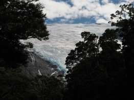 Rob Roy Glacier through the trees