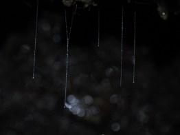 Glowworms near Clinton Hut