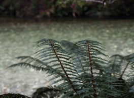 Fern & Clinton River