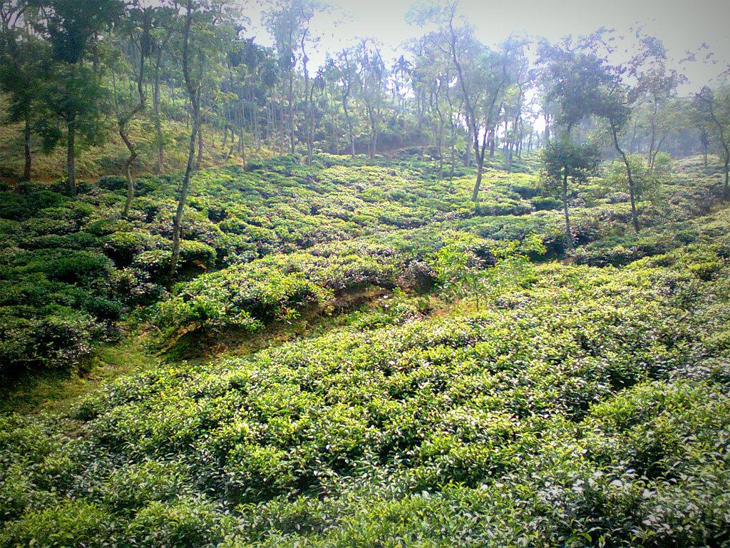Forest Resources of Bangladesh