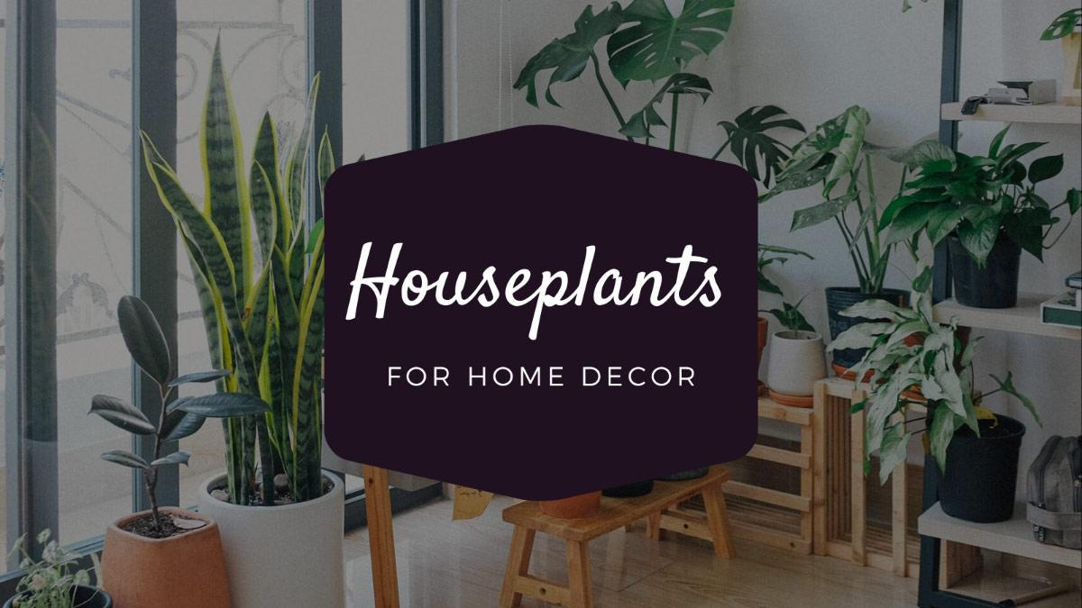 Houseplants-Home-decor