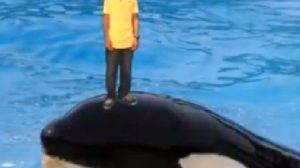 Captura de Tela 2012 10 10 às 22.49.19 - Família Ourfali processa YouTube