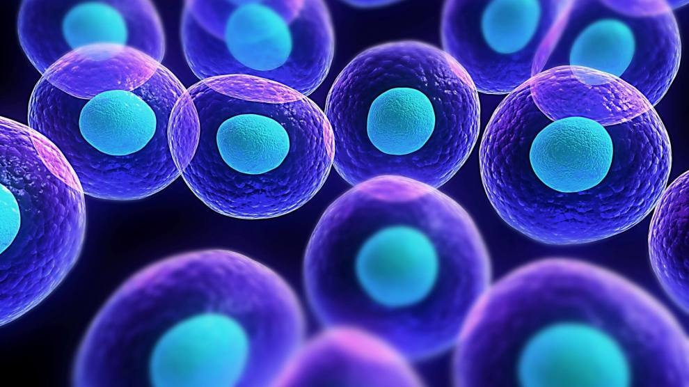 Eliminar Células-Zumbi pode retardar o envelhecimento, afirma estudo
