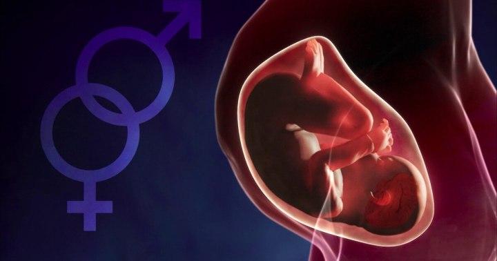 Exame cerebral dá pistas sobre indentidade de gênero e transtornos, aponta estudo 11