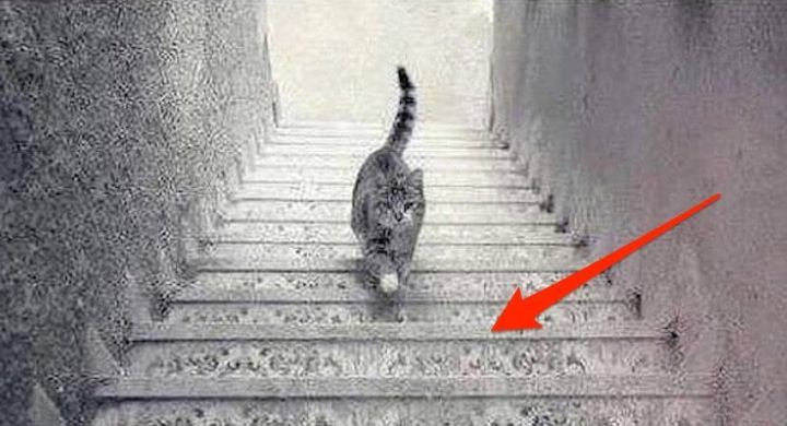 dilema-do-gato-descendo