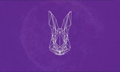 white rabbit capa - Decodificando o SXSW para o Brasil