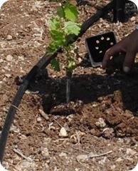 cs planting 089