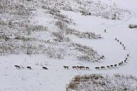 Grup Ujqerish ne Debore - Foto Davide Dolando