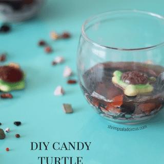 DIY Candy Turtle Terrariums