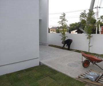 芝生 を張りました。採取したてのフカフカ高麗芝 | 川口の白い家