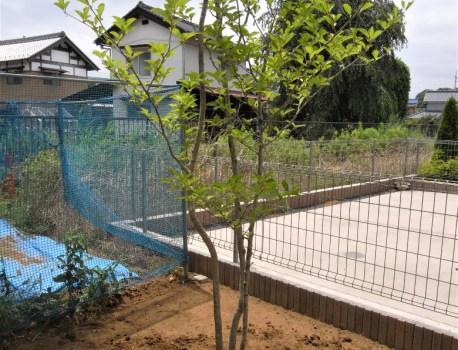 植栽工事 に着手。梅雨が開け、いよいよ外構工事です