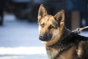 dog-training-survivial