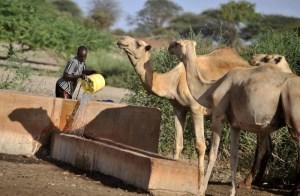 Outbreak of Rift Valley Fever in Kenya