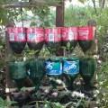 Categories diy gardening homesteading how to shtf survival