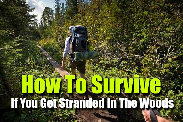 How To Survive If You Get Stranded In The Woods  SHTF