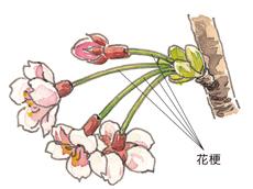 |園蕓用語集|みんなの趣味の園蕓 NHK出版