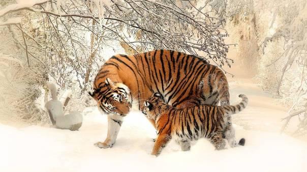 animal espiritual