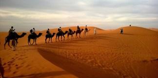 poušť s velbloudy
