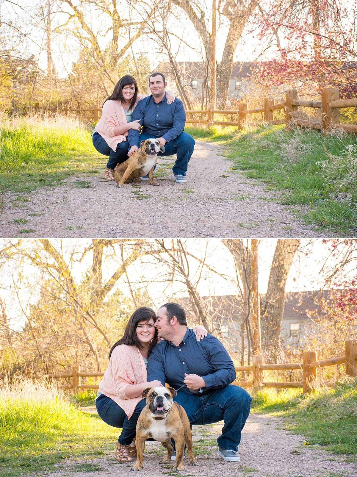 bull dog pink spring blossoms outdoor campus west rapid city south dakota engagement photos 1