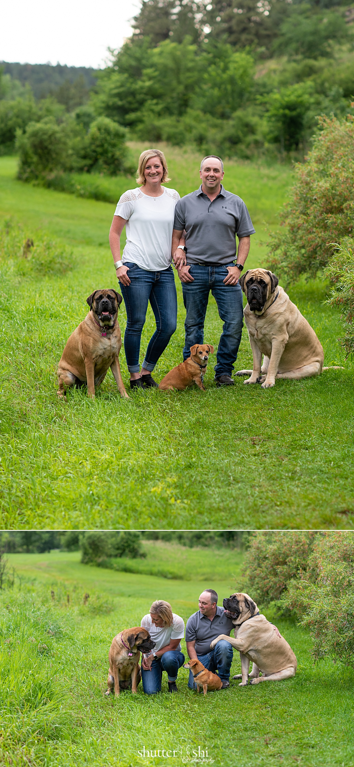 tall bride short groom pose ideas, mastiff dogs, dachshund, rapid city family photographer with dogs